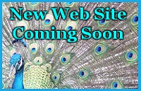 Web Site Coming Soon